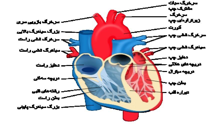 گفتار-اول-قلب-پارت-دوم