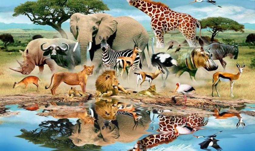 رفتار-جانوران-گفتار-دوم-پارت-چهارم