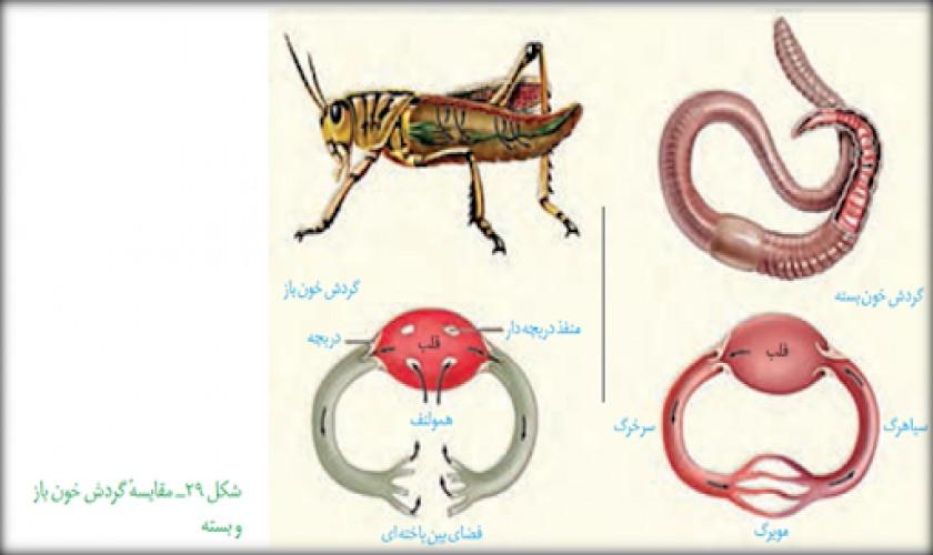 گردش-مواد-در-جانوران-گفتار-چهارم-فصل-چهارم-پارت-اول