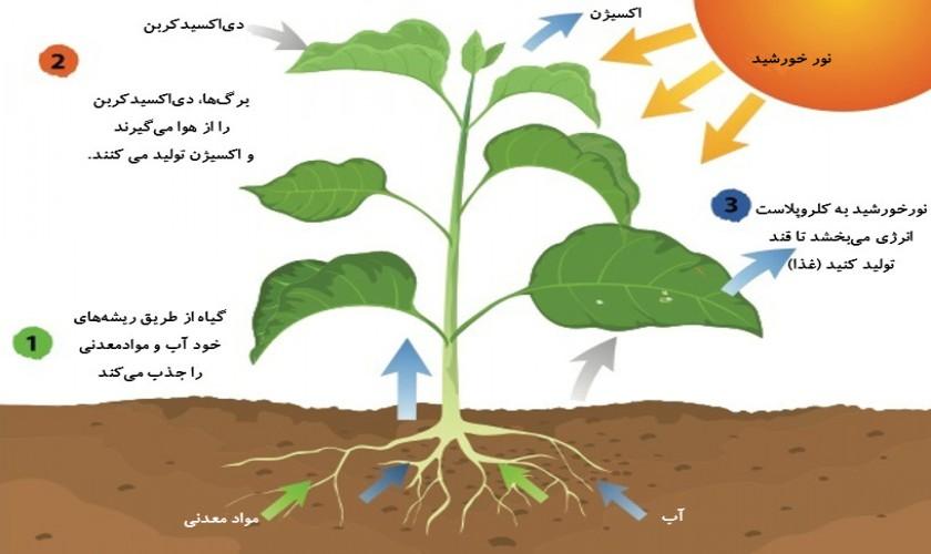 جذب-و-انتقال-مواد-در-گیاهان-فصل-هفتم-سال-دهم-پارت-دوم